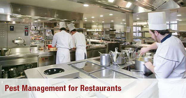 Restaurant Pest Control in and near Brooksville Florida