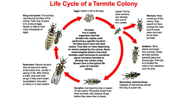 Termite Treatment Pest Control in and near Homosassa Springs Florida