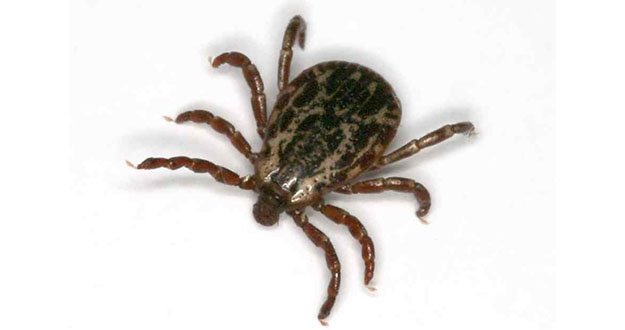 Tick Pest Control in and near Lecanto Florida