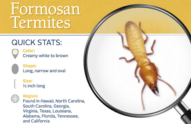 Formosan Termite Control in and near Lutz Florida