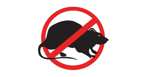 Rat Pest Control in and near New Port Richey Florida