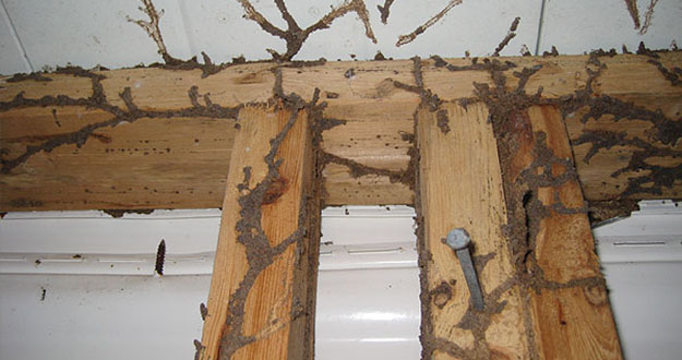 Wood Termite Control in and near New Port Richey Florida