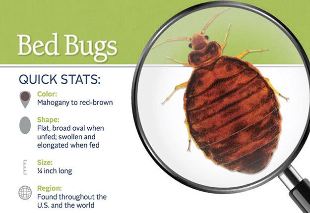 Bed Bug Pest Control in and near Plant City Florida