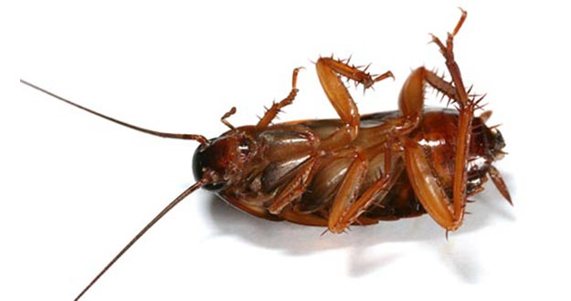 Cockroach Pest Control in and near Plant City Florida