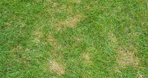 Lawn Fungus Control in and near Spring Hill Florida