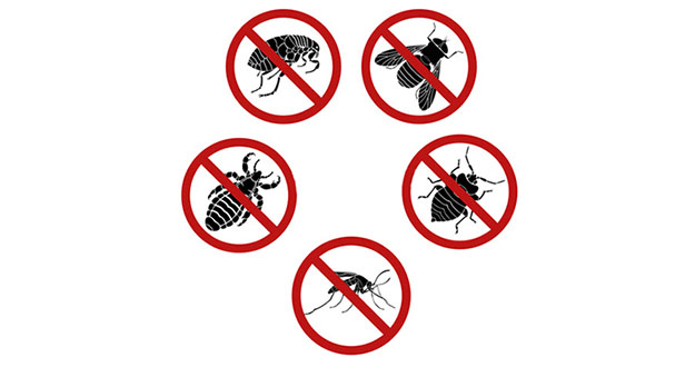Bug Pest Control in and near Tampa Florida