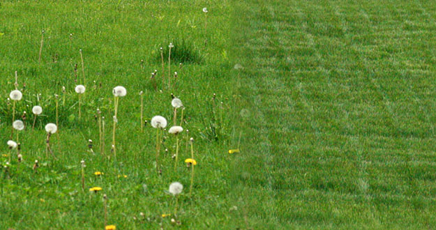 Lawn Weed Control in and near Tampa Florida