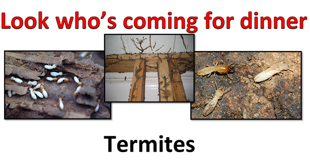 Termite Control in and near Tampa Florida