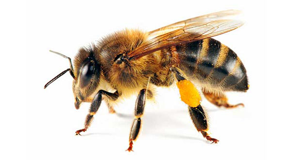 Bee Pest Control in and near Tarpon Springs Florida