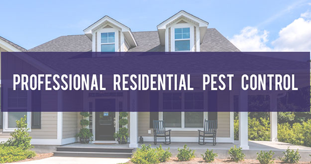 Residential Pest Control in and near Tarpon Springs Florida
