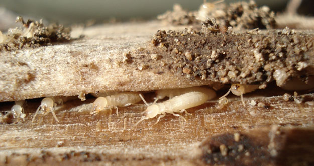 Termite Prevention Pest Control in and near Wesley Chapel Florida